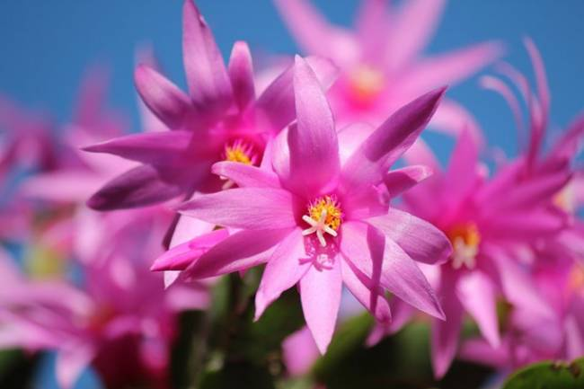 7 Flowering Succulents to Enhance the Beauty of Your Ambiance
