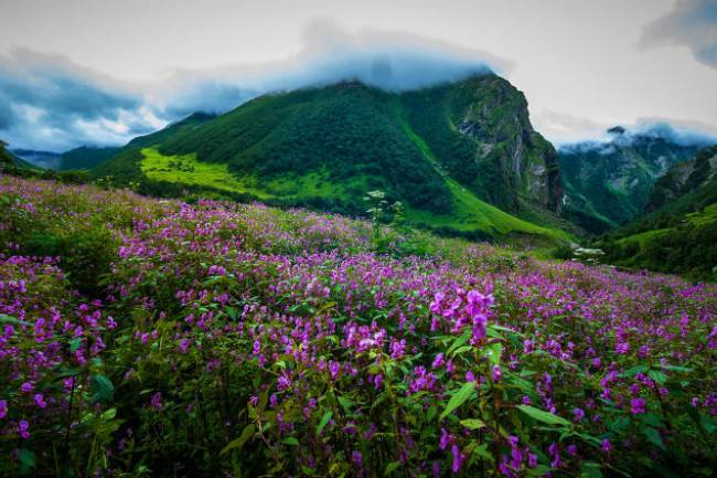Valley of Flower- A Nature's Trail