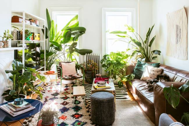How to choose from the best indoor plants for home