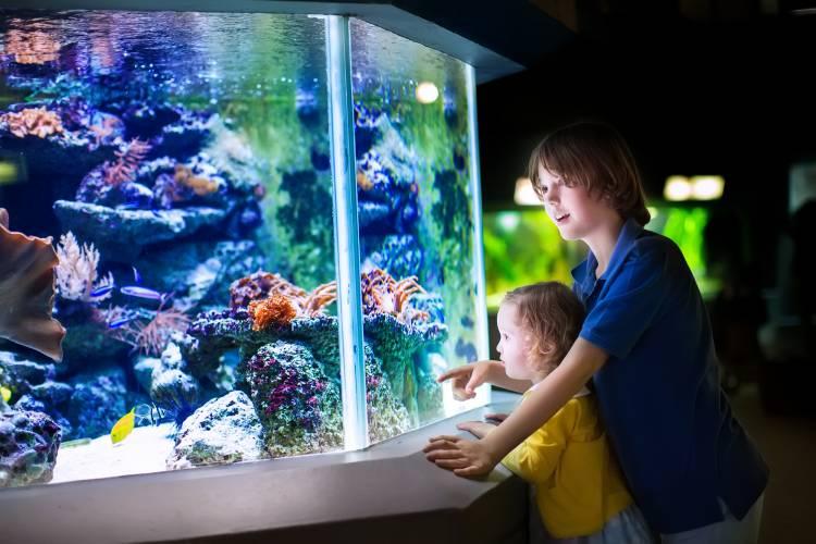 Some Creative Aquarium Lighting Ideas for Home