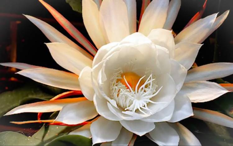 Arzoo/Pending 6 Astonishingly Rare Flowers You may Have Never Seen