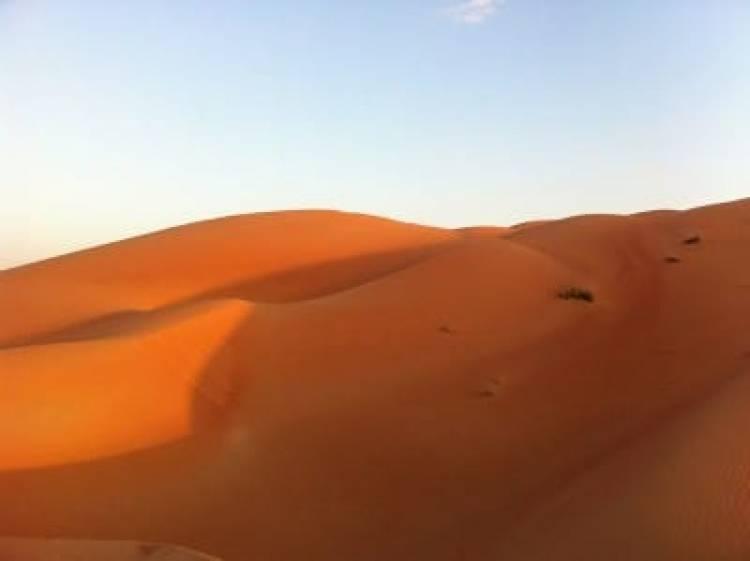 Why Should You Choose Morning Desert Safari In Dubai?