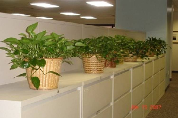 Why Use A Corporate Plant Service In Philadelphia?