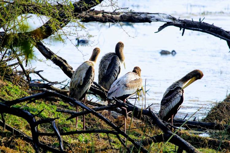 Experience the Tranquility of Nature at Bharatpur