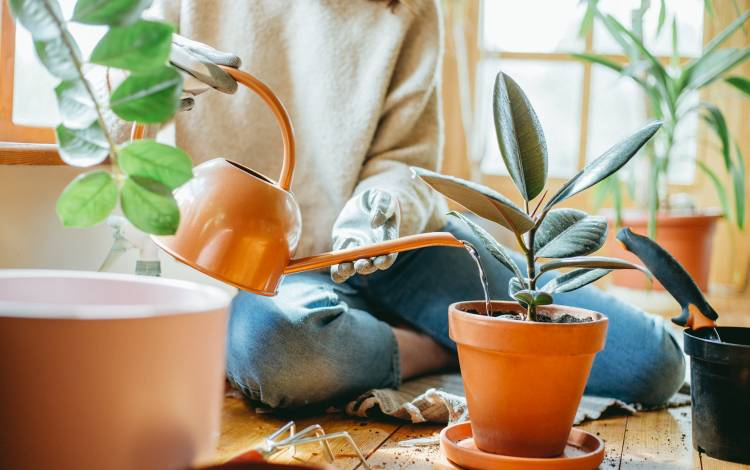 How Indoor and Outdoor Plants Help to Improve the Health of The Home